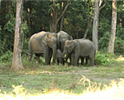 A group of elephants spotted in North Bank landscape