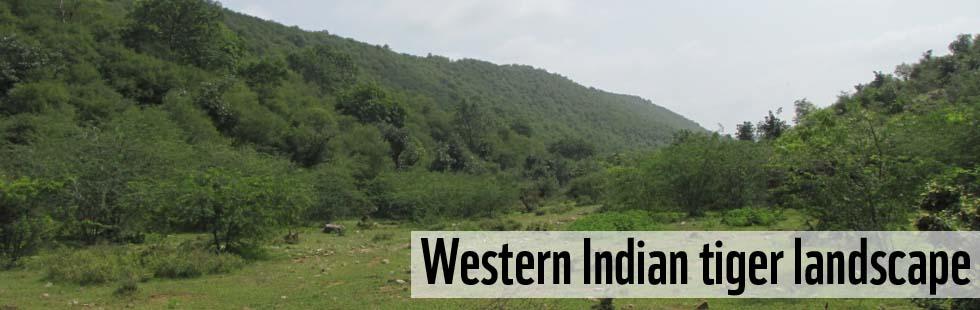 Western Indian Tiger Landscape Wwf India