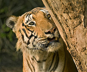 © Hari Somashekar/WWF-India