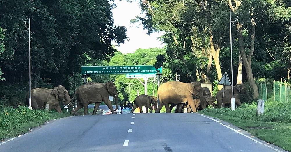 Where elephants roamed free