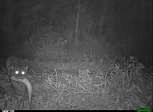 Camera Traps Capture Exciting Animal Behaviour Across