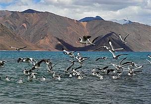 / ©: WWF-India