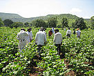 Cotton is an extremely heavy user of pesticide with consequences of building up of pesticide residue in soil & water.