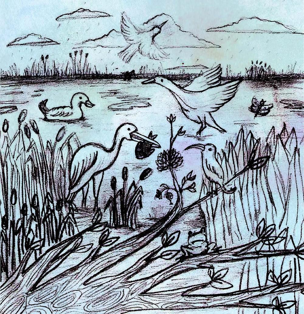 Why India needs her wetlands!
