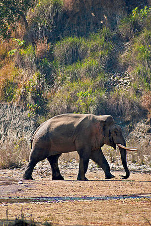 major habitat of india