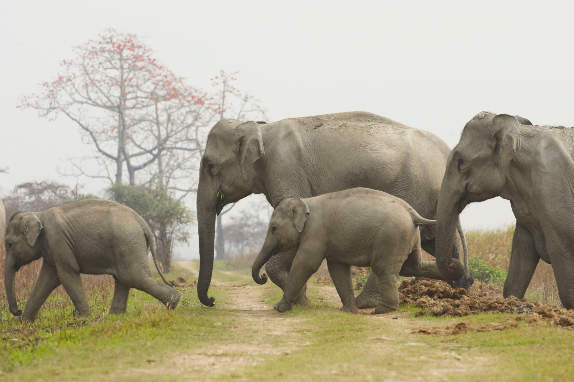 fence that grows by itself | WWF India