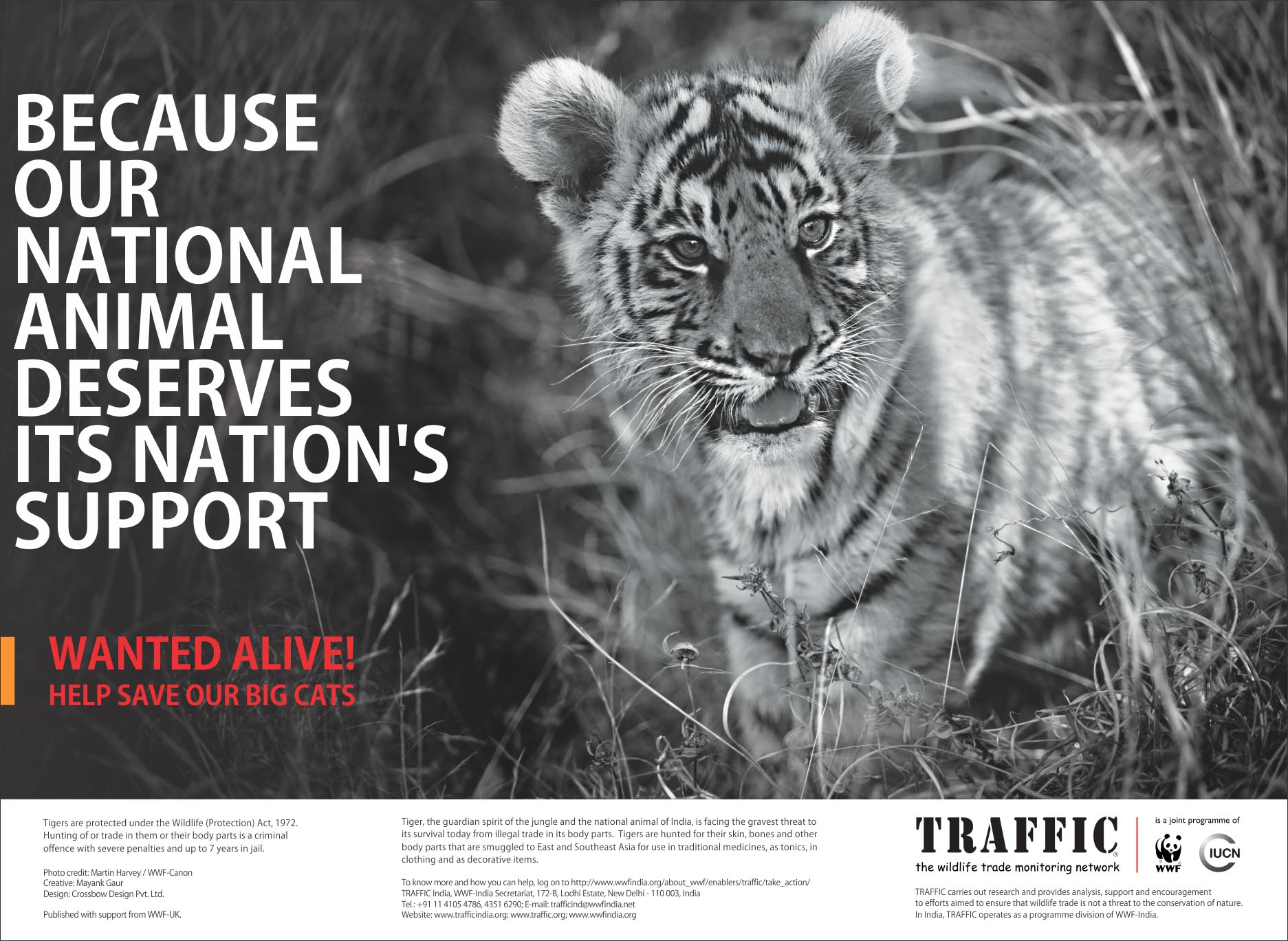 Save Tiger Images Save Tiger Pos