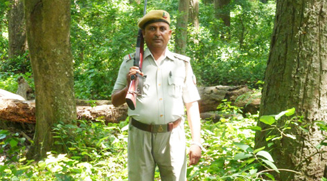 Image result for FOREST GUARD