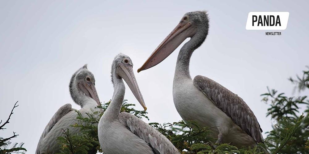 Kokkare Bellur: Nest in Peace