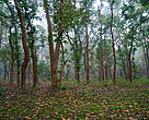 The forests of the newly declared Pilibhit Tiger Reserve