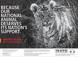 Cats Protection Campaign