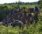 Pregnant Elephant killed at Hojai