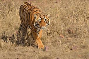 © Sunny Shah/WWF-India