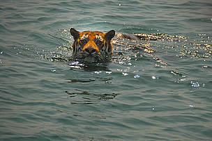 © Chiranjib Chakraborty/WWF-India
