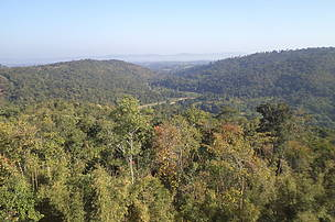 The hills of the Karbi Anglong forest complex