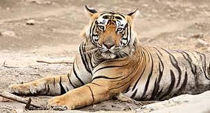 © Ravi Singh/WWF-India