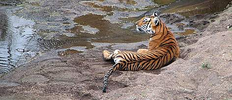 / ©: Vijay Kumar/WWF-India