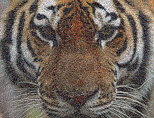 Come and join the Roar of the Tiger – WWF-India's signature campaign - to show your support for ... / ©: A. Christy Williams/WWF