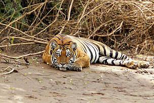 / ©: Vijaya Kumar K/ WWF-India