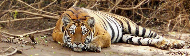 © Vijaya Kumar K/ WWF-India
